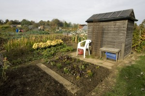 Allotment plot with shed empty chair and green vegetables Chippi